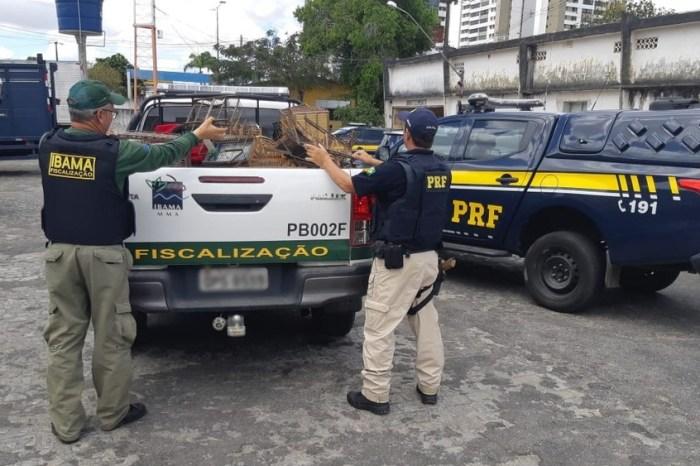 Quase 60 animais são apreendidos durante operação, na Paraíba