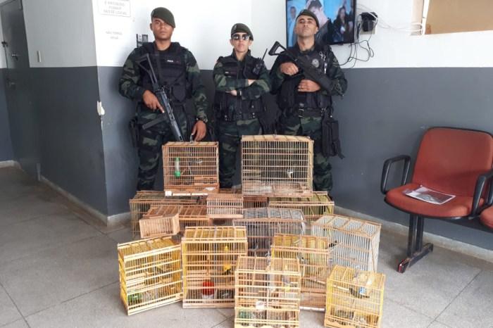 Combate aos crimes ambientais resulta em apreensões de armas e aves no Cariri