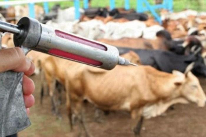 Campanha Aftosa: Prefeitura de Monteiro alerta para o prazo de vacinação