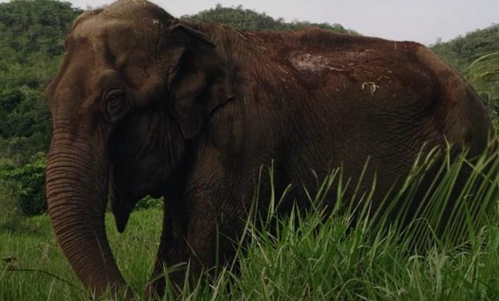 'Cativeiro' mostra história da elefanta Lady, que viveu em JP