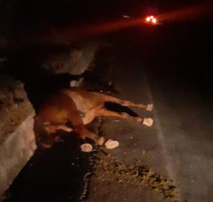 Animal na pista provoca acidente com carro de vereador caririzeiro