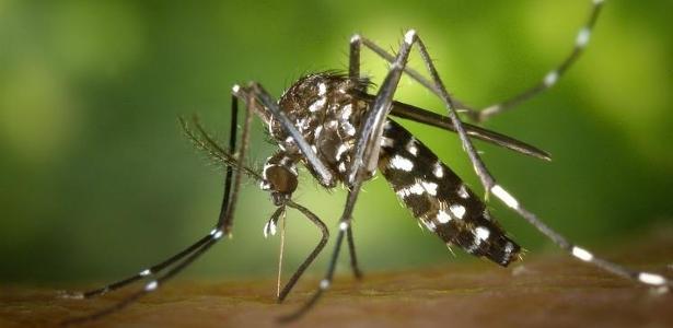 Paraíba registra aumento de 415% nos casos prováveis de chikungunya e 161% nos casos prováveis de zika