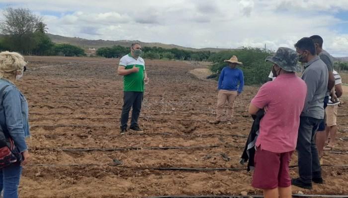 Algodão orgânico irrigado aponta perspectiva para o Cariri paraibano