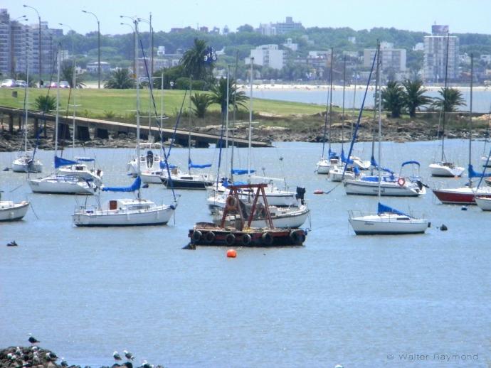 Puerto de Yates, Montevideo