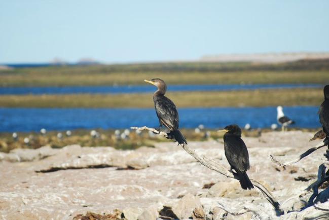 Visitar Patagonia para redescubrirte