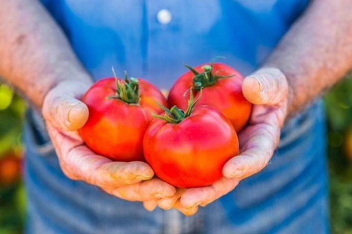 El tomate, una fruta saludable y que combate el envejecimiento