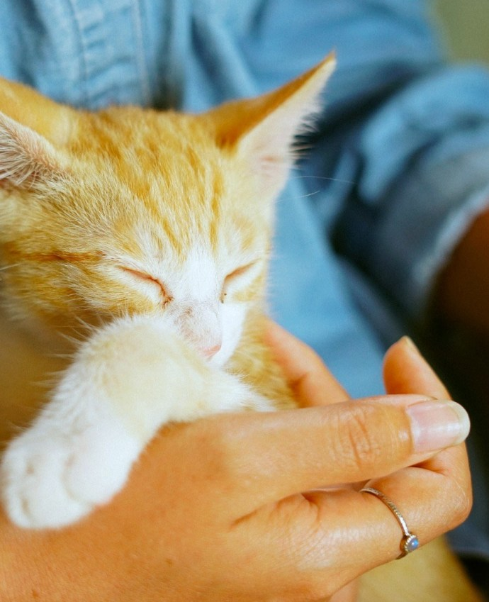 Adopting a pet after midlife has its own set of advantages. While it's always good to have companionship, this becomes even more important as we age.