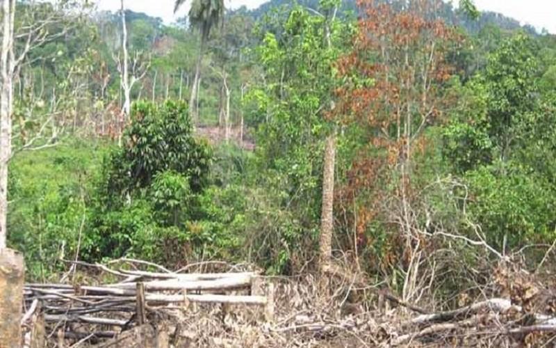 Les bailleurs au chevet de la forêt en Côte d'Ivoire