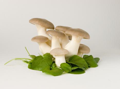 royal trumpet king trumpet mushroom