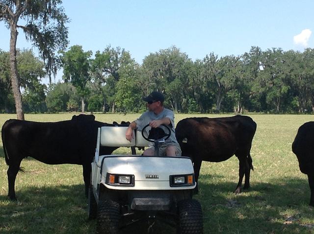Torm-2-cows-close