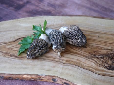 Morel Mushrooms on log