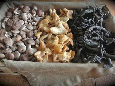 mushroom mix gourmet