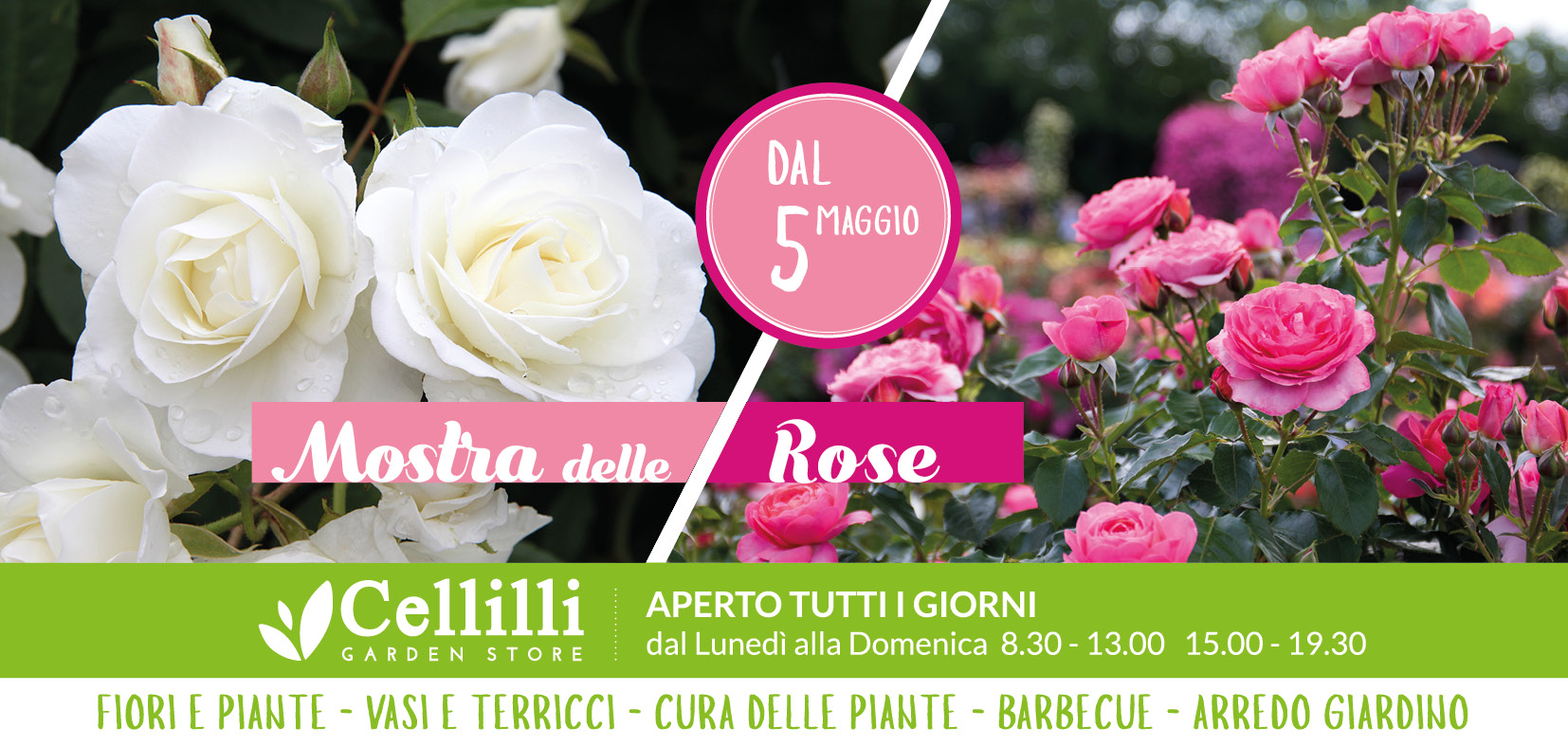 cartolina rose