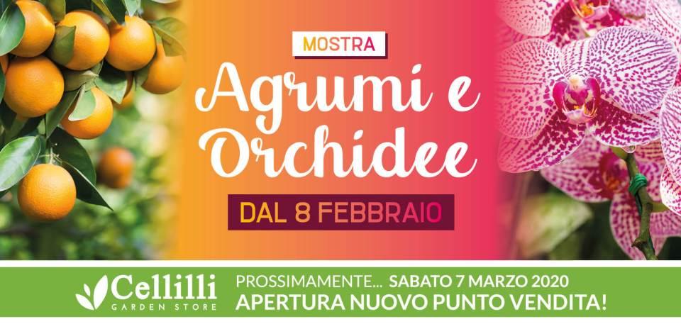 Cartolina Agrumi Orchidee