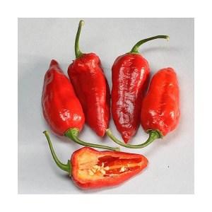 semi-di-peperoncino-bhut-jolokia-strain-i-Img_Principale_25155