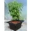 FG500-Planted-web_5103-3947