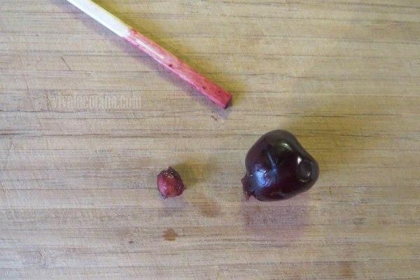 Retirar el Hueso de la cereza con el palillo para el clafoutis de Cereza