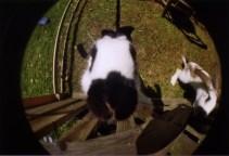 Rabbit through a Fisheye (2009)