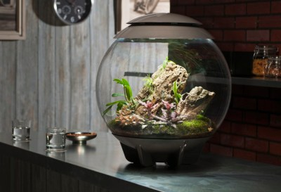Custom Vivarium and Terrarium Displays and Supplies