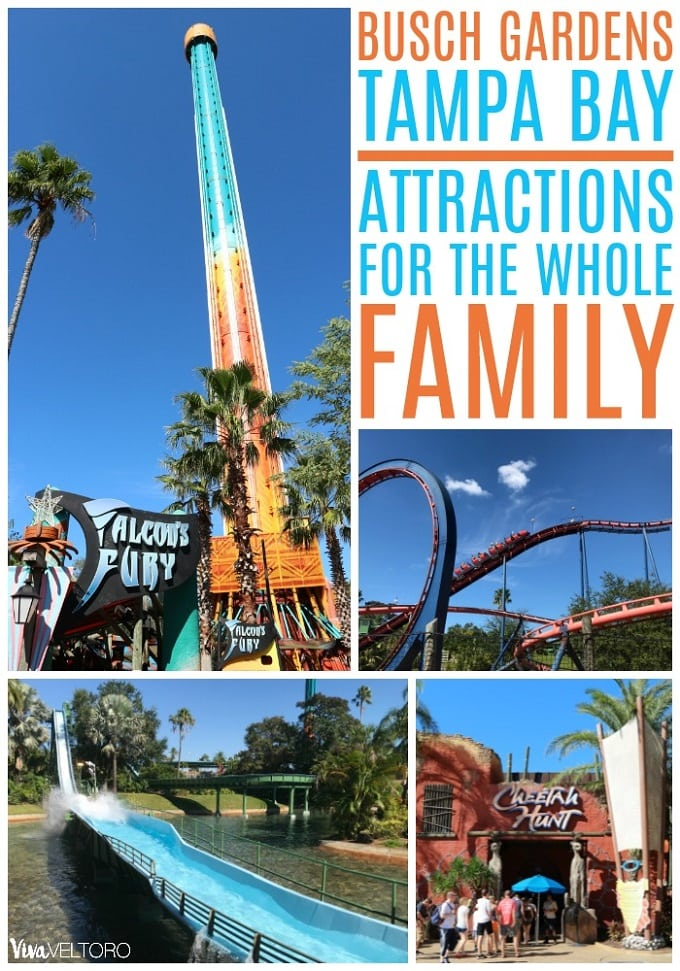 busch gardens tampa rides and attractions for the whole