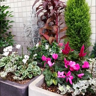 「エントランスの花」と「花壇の植替え」