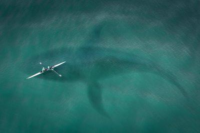 ecologia - baleia sob canoa