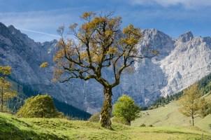 As muitas formas de saúde e bem-estar Naturopatia, Homeopatia, Reiki, Terapia Auricular, Acupuntura, Florais…