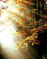 Viva para alcançar a iluminação