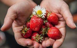 Somos Bio: A grande vantagem e os benefícios da Agricultura Biológica