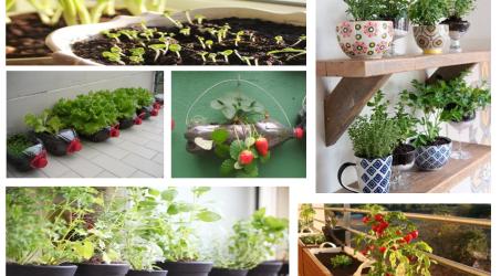 Somos Bio: Horta em casa