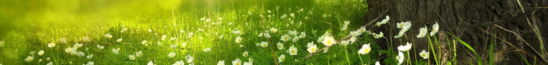 Com a Primavera: Abre-te ao Novo