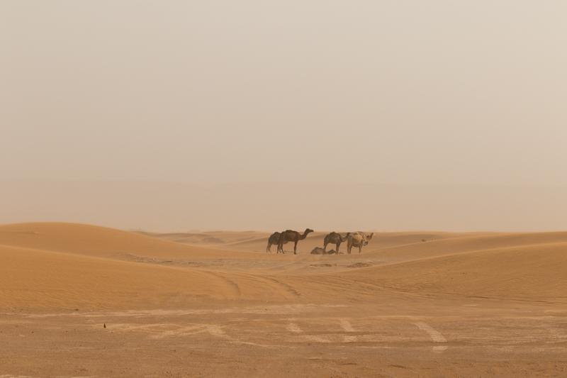 Viver a Viagem - Erg Chigaga - Marrocos - Alexandre Disaro - 52