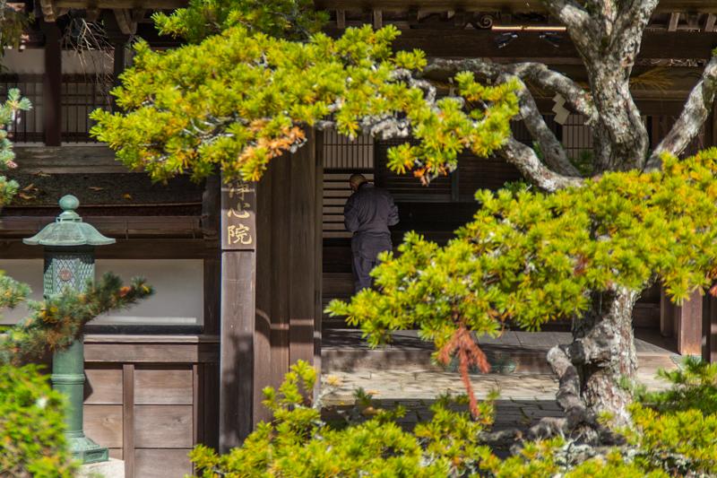 viver-a-viagem-japao-japan-koyasan-monte-koya-mount-koya-40