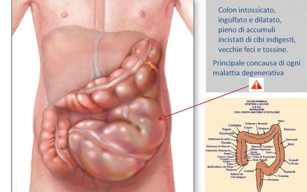 http://www.dionidream.com/farina-colla-organismo/