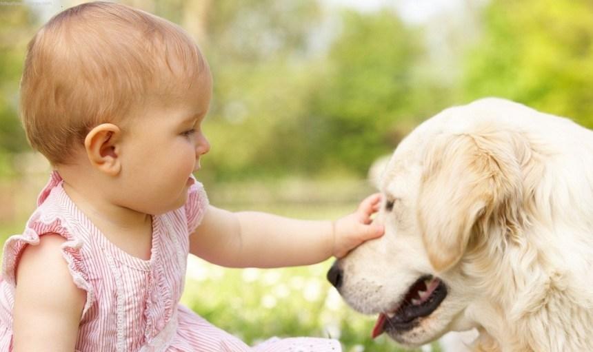 bambina-accarezza-un-cane