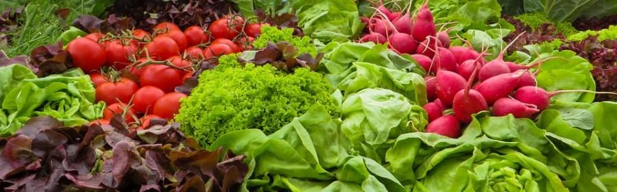 verdura ringiovanisce cervello