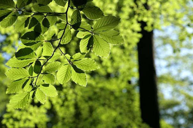 siamo tutti collegati come foglie