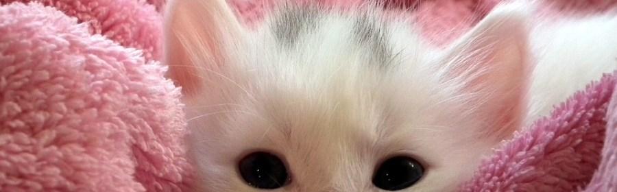 curiosità gatti