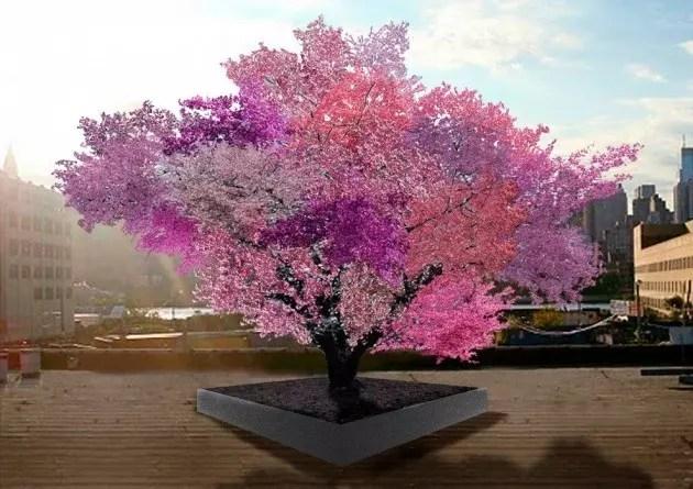 albero_frutti