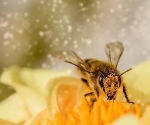 Perché il miele non è vegano?