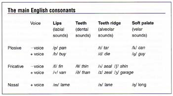 The Sound System Of Language