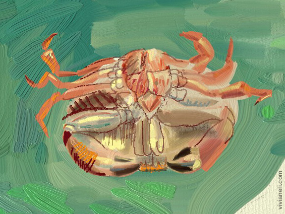 An upside down crab painted digitally