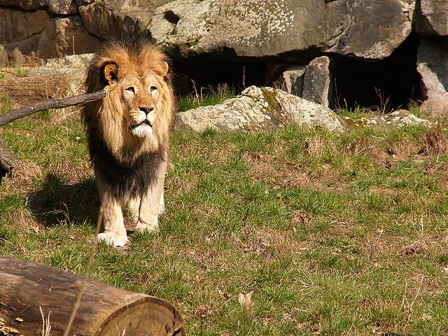 Zoo di Berlino  Biglietti e Orari  VIVI Berlino