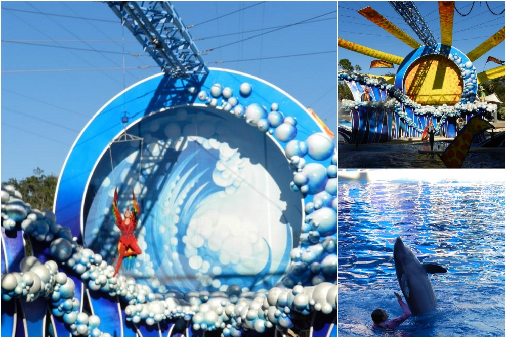 Show Sea World Golfinhos