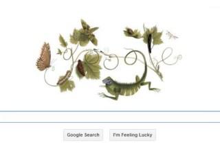 google doodle Maria Sibylla Merian