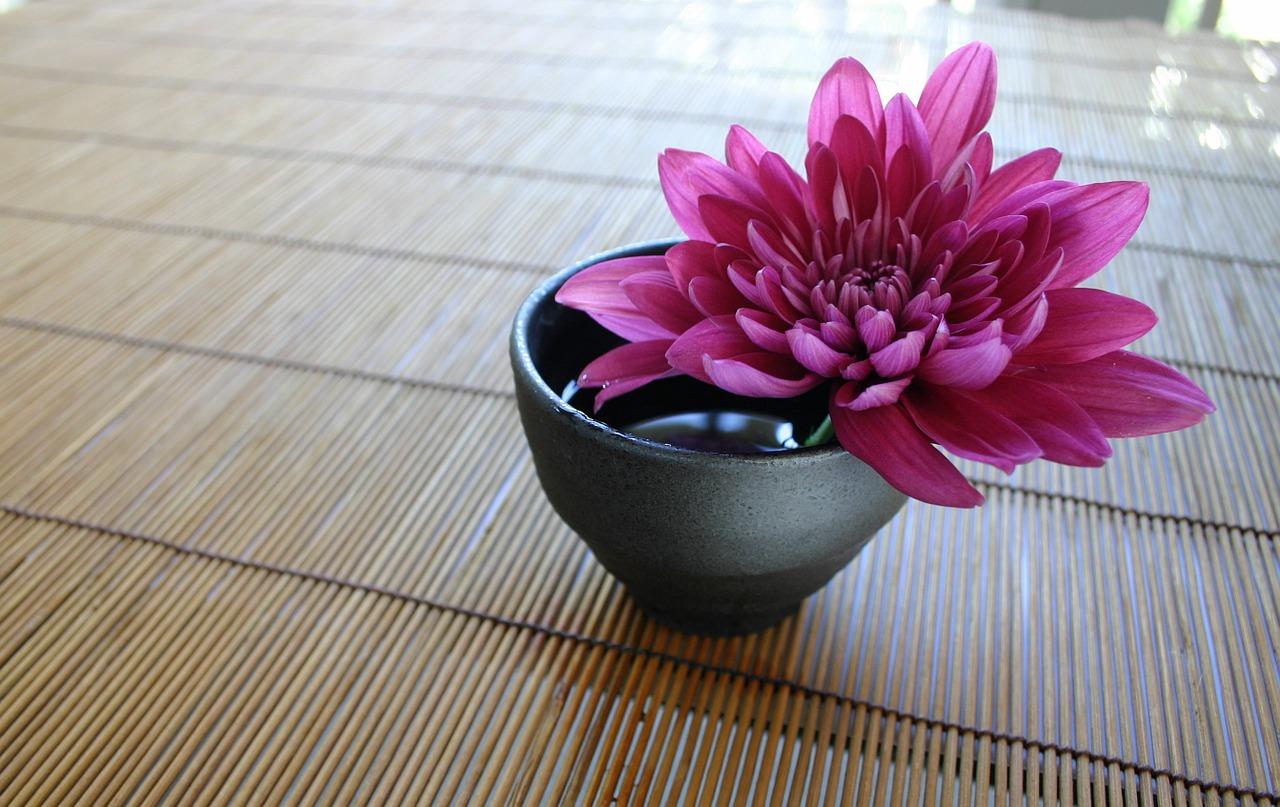 Feng Shui: 5 plantas para atraer abundancia, prosperidad y dinero 28/05/20