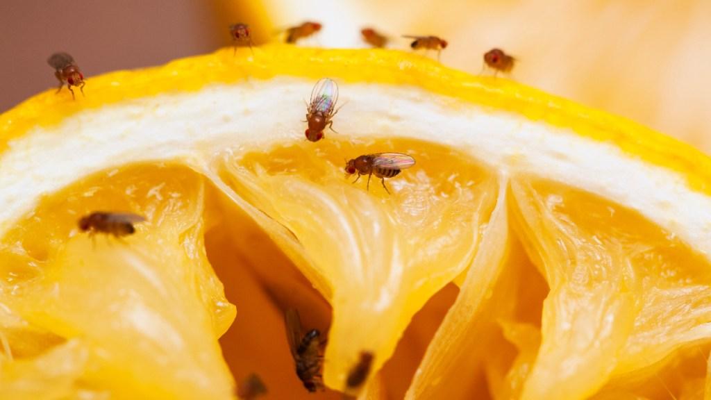 Odias-las-moscas-Esta-trampa-hecha-con-servilletas-te-ayudará-a-deshacerte-de-ellas 02/06/20