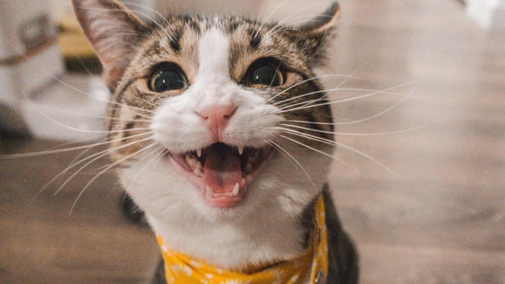 Sabías-que-tu-personalidad-influye-en-la-de-tu-gato-Estudio-explica 30/06/20