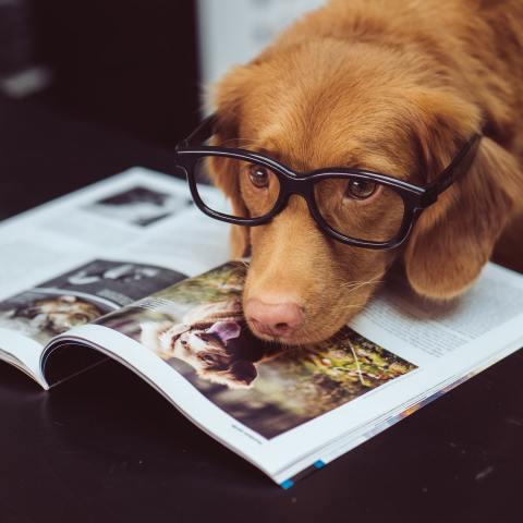 signo-zodiacal-perro-labrador-inteligente-15-de-junio-2020