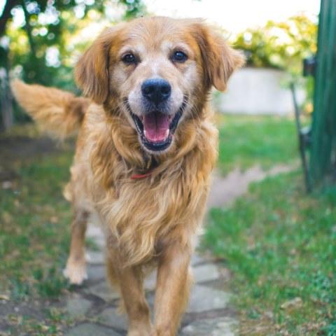 perros-pueden-detectar-malas-personas-12-de-junio-2020